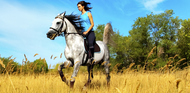 Летние конные прогулки