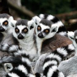 Топ-6 зоопарков Алушты