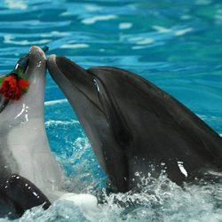 Дельфинарии Адербиевки