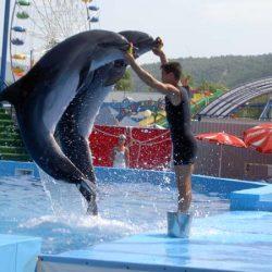 Дельфинарий Архипо-Осиповки