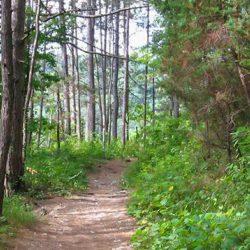 Зеленые зоны и парки Архипо-Осиповки