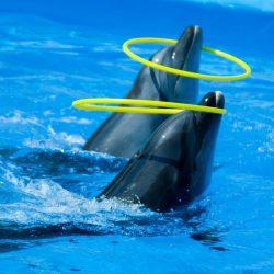 Дельфинарии Феодосии