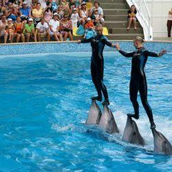 Дельфинарии Ялты