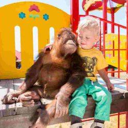 Зоопарки Геленджика