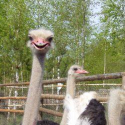 Зоопарки Керчи