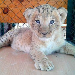 Зоопарки Севастополя