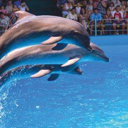 Дельфинарии Небуга