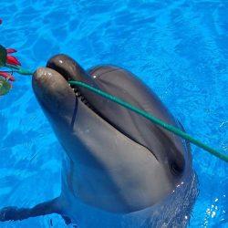 Дельфинарий в Оленевке