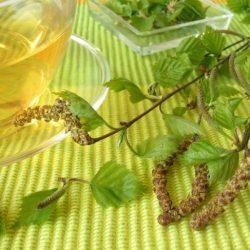 В Вологде туристов заманивают лимонадом на березовых почках