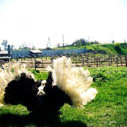 Зоопарки в поселке За Родину