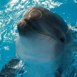 Дельфинарии Новороссийска