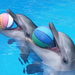 Дельфинарии Благовещенской