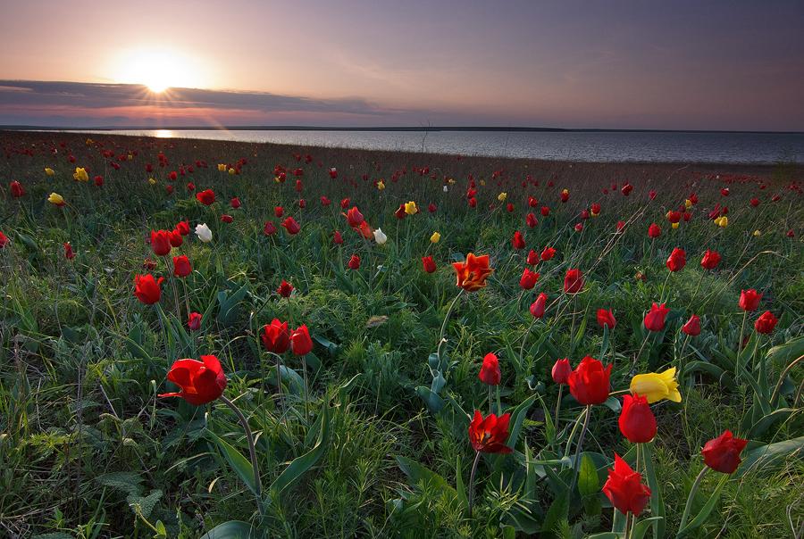 5 чудес республики Калмыкия
