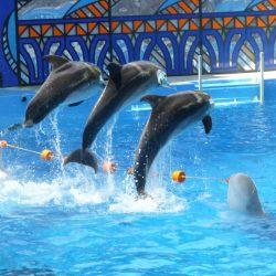 Дельфинарии в Вардане