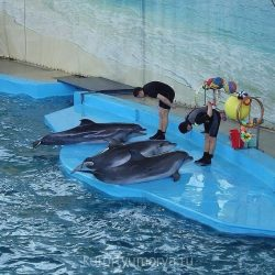 Дельфинарии в Лазаревском