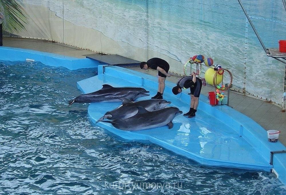 это дельфинарий лазаревское фото делаем любые принты