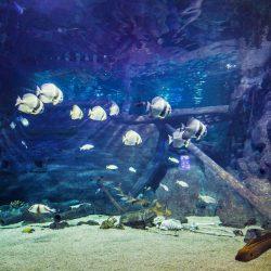Зоопарки Вардане